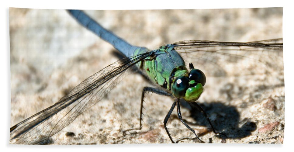 Dragonfly Hand Towel featuring the photograph Eastern Pondhawk Side by Cheryl Baxter