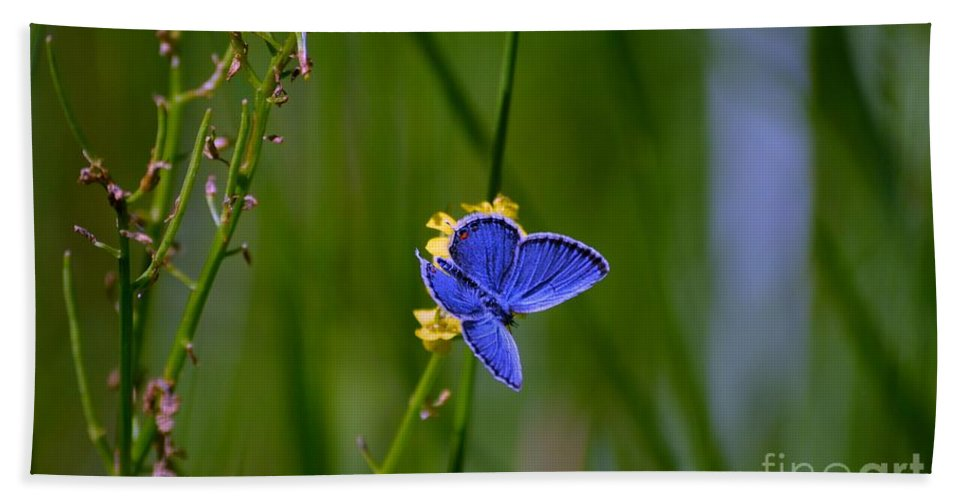 Blue Butterfly Bath Sheet featuring the photograph Eastern Tail Blue Butterfly by Peggy Franz