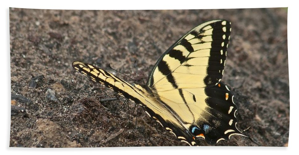 Adult Bath Sheet featuring the photograph Eastern Tiger Swallowtail 8564 3241 by Michael Peychich