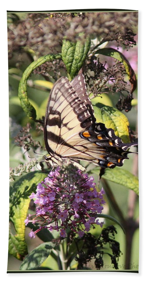 Eastern Tiger Swallowtail Hand Towel featuring the photograph Eastern Tiger Swallowtail - Butterfly by Travis Truelove