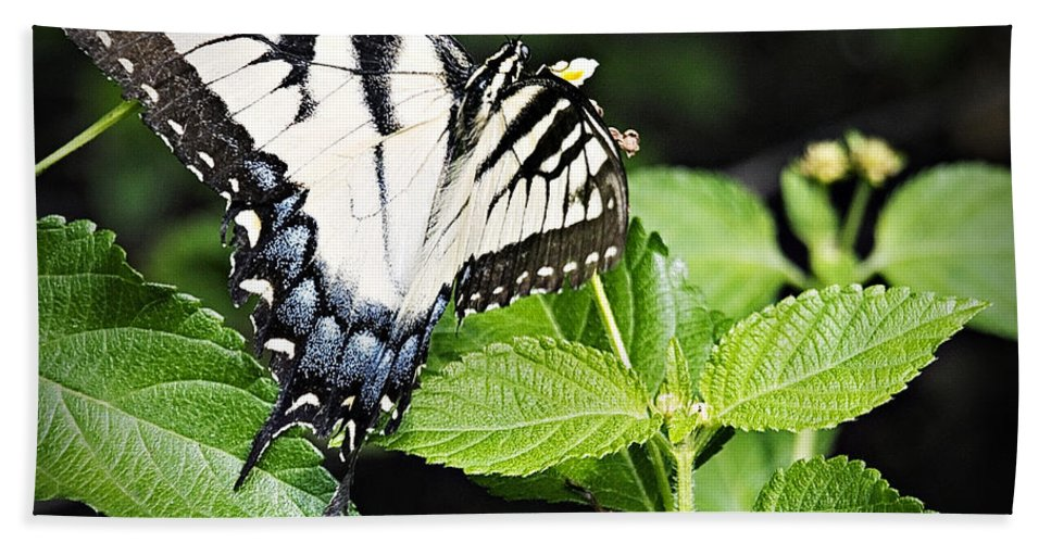 Butterfly Bath Sheet featuring the photograph Eastern Tiger Swallowtail Butterfly by Walter Herrit