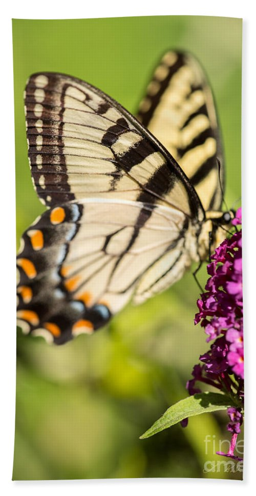 Eastern Tiger Swallowtail On Purple Butterfly Bush Against Green Bath Sheet featuring the photograph Eastern Tiger Swallowtail by Iris Richardson