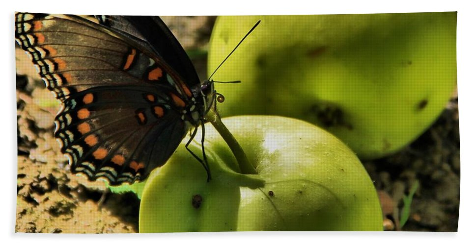Butterfly Photograph Hand Towel featuring the photograph Eat Healthy by Dan Sproul