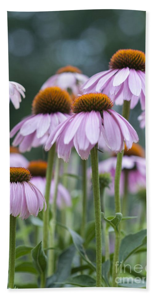 Beauty In Nature Hand Towel featuring the photograph Echinacea Purpurea by Juli Scalzi
