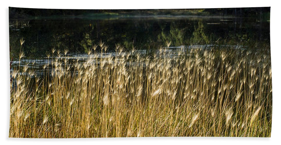 Colorado Photographs Bath Sheet featuring the photograph Edge Of The Pond by Gary Benson