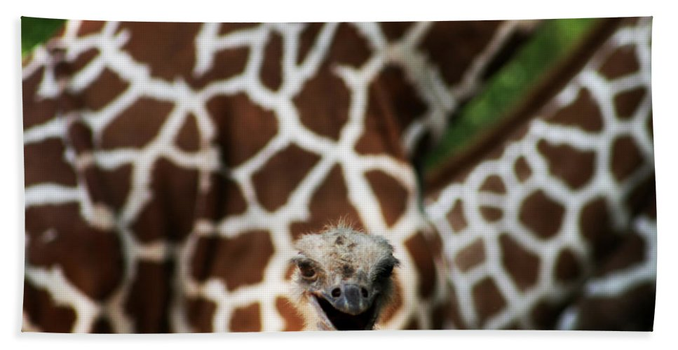 Ostrich Hand Towel featuring the photograph Eeekkk by Kathy Clark