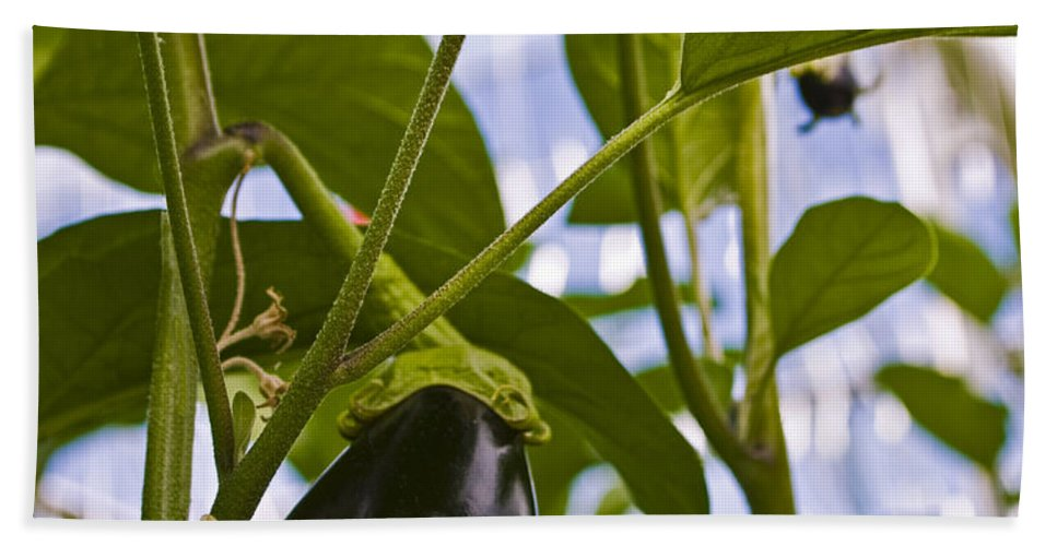 Egg Plant Hand Towel featuring the photograph Egg Plant by Rob Mclean