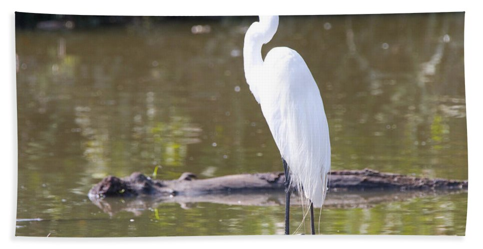 Great Blue Heron Photographs Hand Towel featuring the photograph Egret Has A Lot To Say I by Vernis Maxwell
