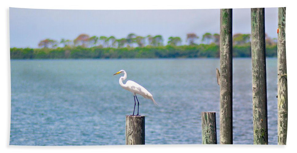 Egret Bath Sheet featuring the photograph Egret In Dunedin Florida by Bill Cannon