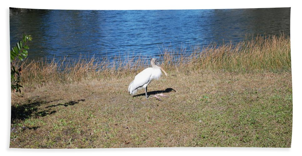 Tired Feet Hand Towel featuring the photograph Egret by Robert Floyd