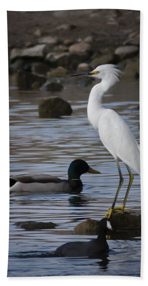 Egret Hand Towel featuring the photograph Egret Standing Guard by Dennis Reagan