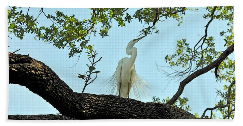 Egret Hand Towel featuring the photograph Egret Waiting For Mating by Lydia Holly