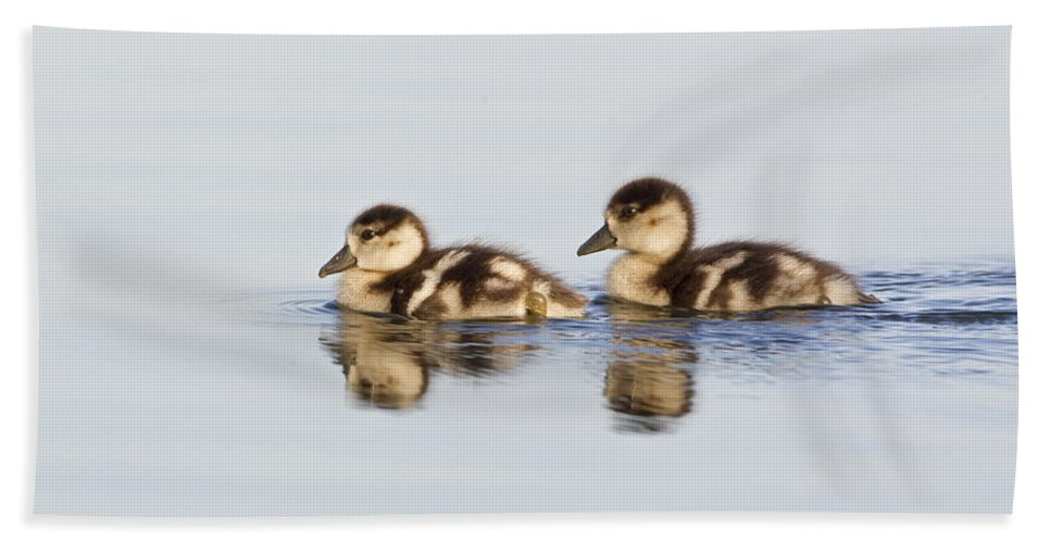Flpa Bath Towel featuring the photograph Egyptian Goose Goslings River Thames by Dickie Duckett