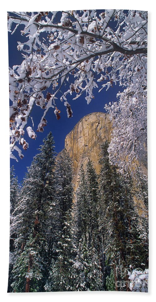 America Bath Towel featuring the photograph El Capitan Framed By Snow Covered Black Oaks California by Dave Welling