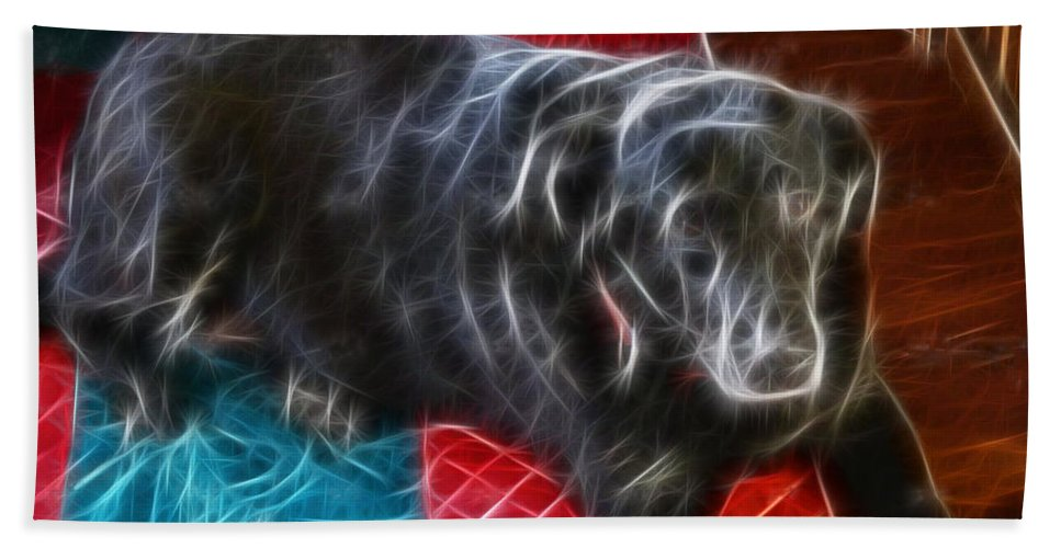 Electrostatic Dog And Blanket Hand Towel featuring the photograph Electrostatic Dog And Blanket by Barbara Griffin