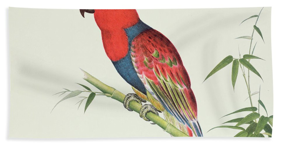 Ornithological Bath Sheet featuring the painting Electus Parrot On A Bamboo Shoot by Chinese School