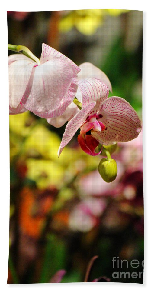 Orchid Hand Towel featuring the photograph Elegance At The Market by Rory Sagner