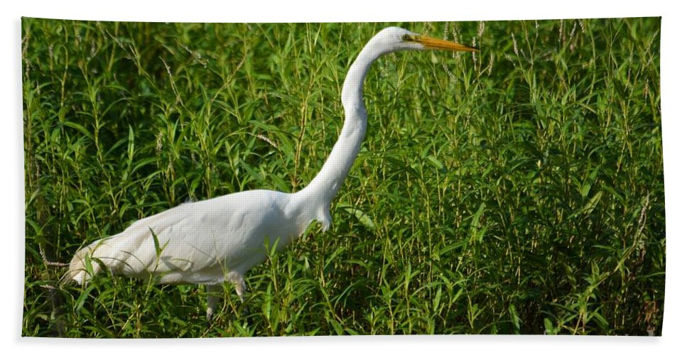 Great Egret Bath Sheet featuring the photograph Elegant Hunter by Deanna Cagle