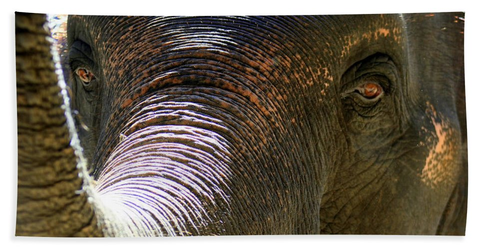 Thailand Bath Sheet featuring the photograph Elephant by A Rey
