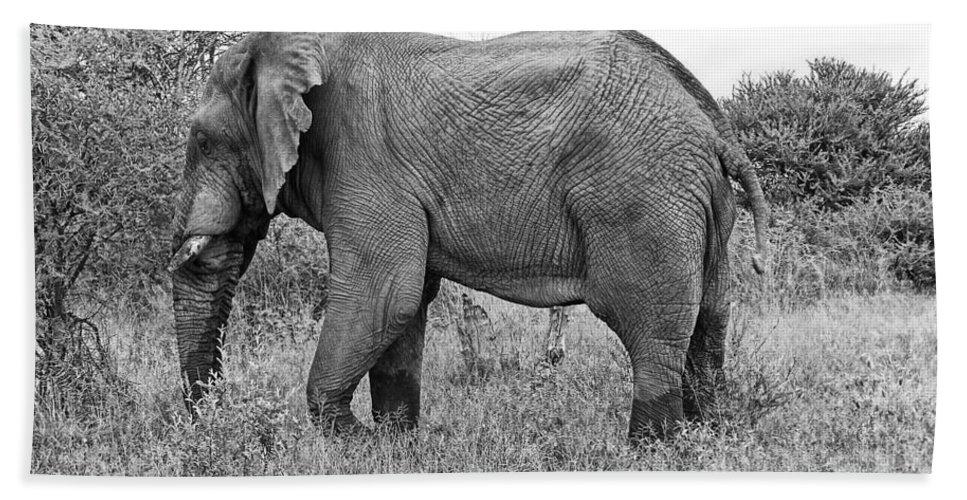 Elephant Bull Bath Sheet featuring the photograph Elephant Bull In Black And White by Douglas Barnard