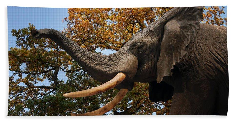 Elephant Hand Towel featuring the photograph Elephant by Carlos Diaz