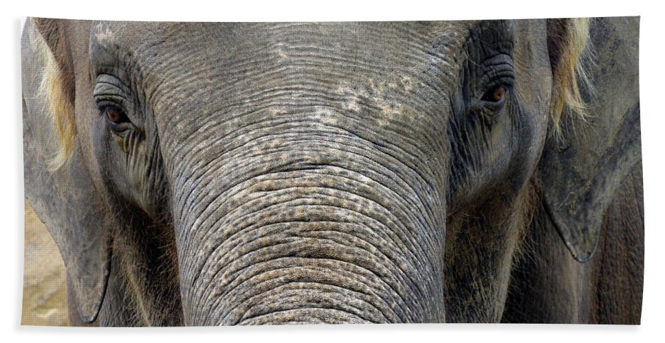 Elephant Hand Towel featuring the photograph Elephant Close Up 1 by Tom Conway