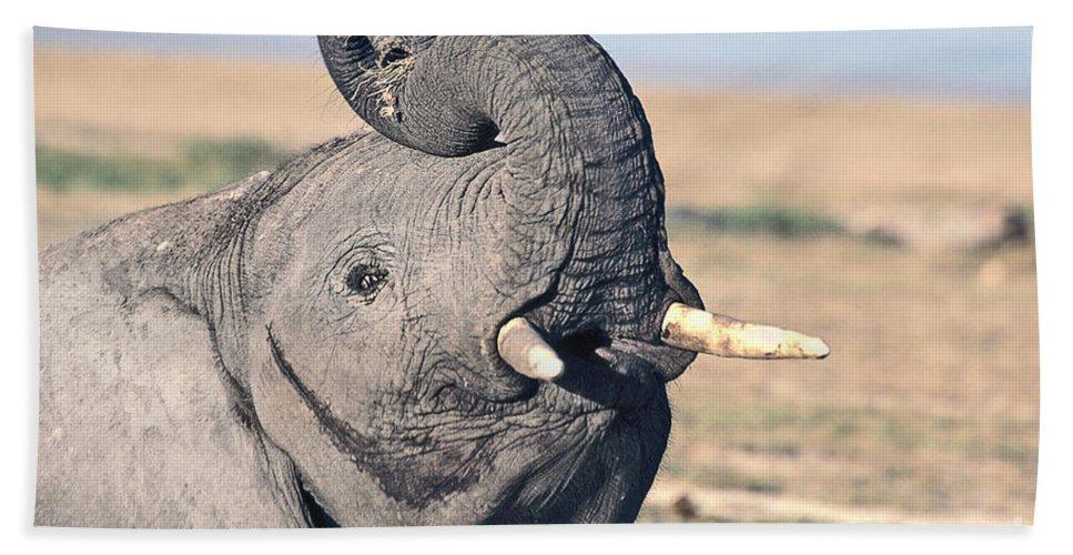African Elephant Bath Sheet featuring the photograph Elephant Curling Trunk by Liz Leyden