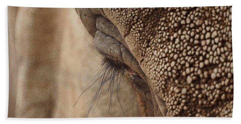 Animals Bath Sheet featuring the photograph Elephant Lashes by Ernie Echols
