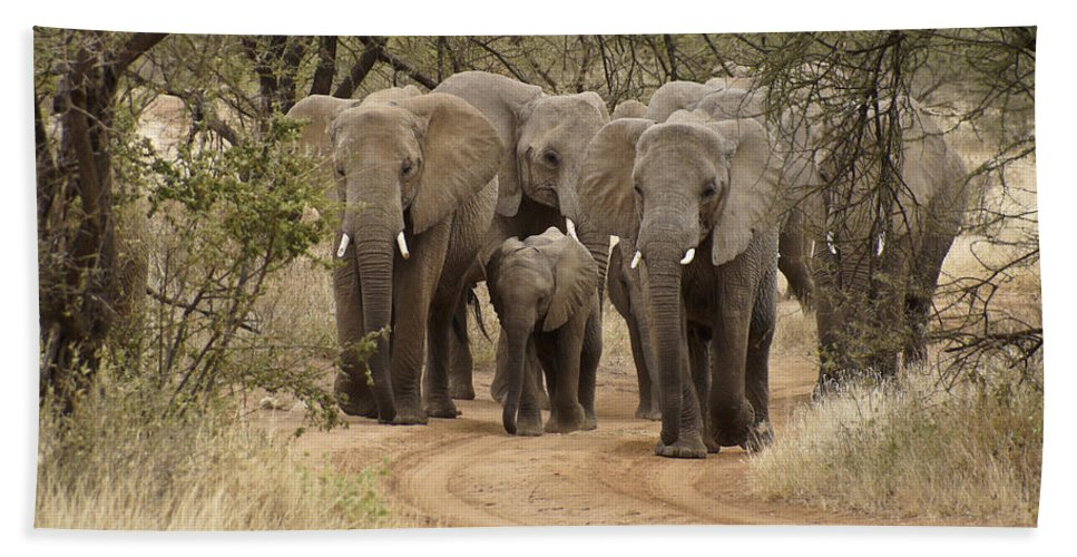 Africa Bath Towel featuring the photograph Elephants Have the Right of Way by Michele Burgess