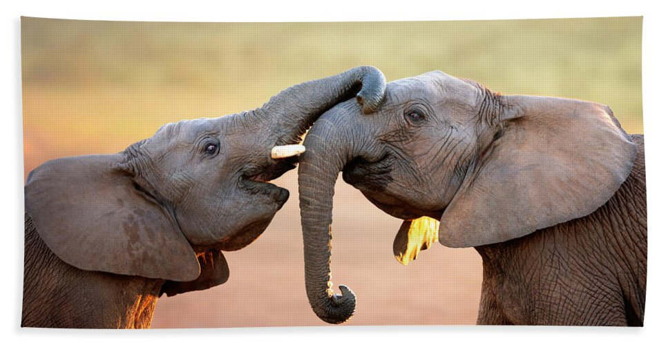 Elephant Bath Towel featuring the photograph Elephants touching each other by Johan Swanepoel