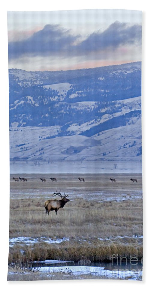 Cervus Canadensis Hand Towel featuring the photograph Elk At Dusk by J L Woody Wooden