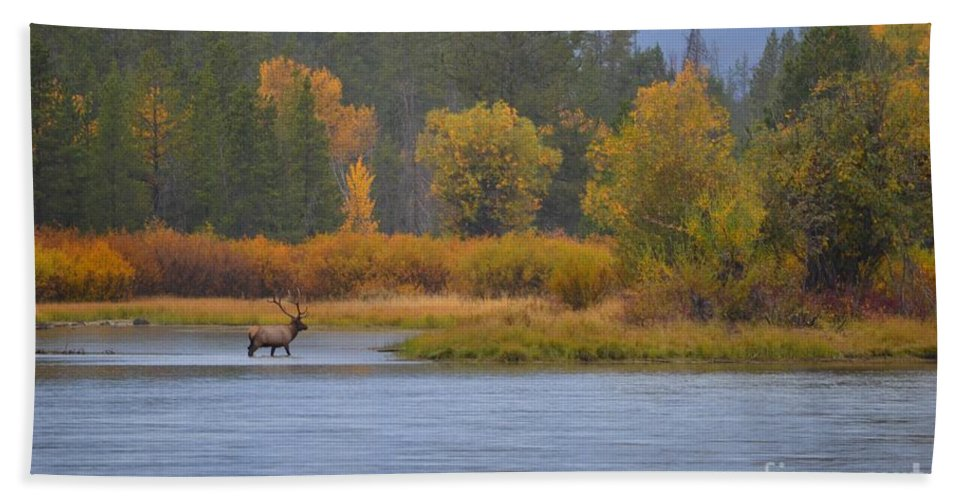 Elk Bath Sheet featuring the photograph Elk Crossing by Deanna Cagle