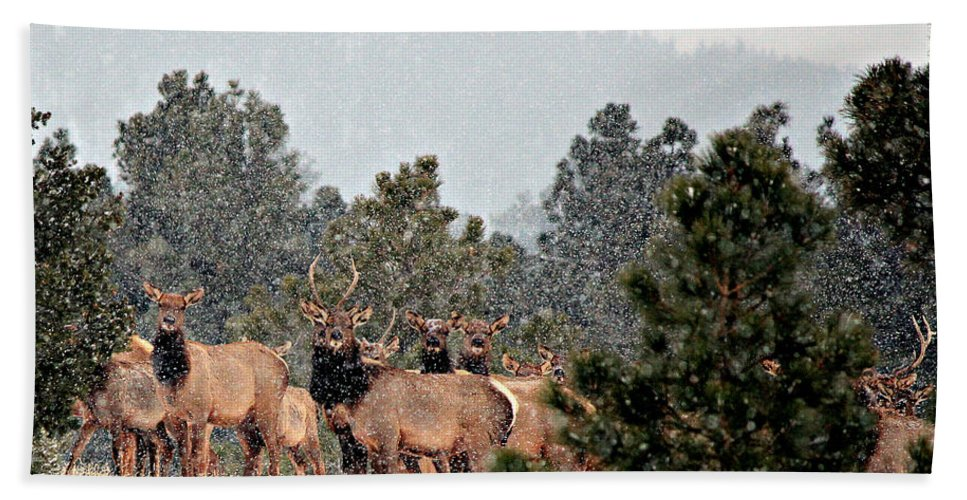 Elk Bath Sheet featuring the photograph Elk In The Snowing Open by Barbara Chichester