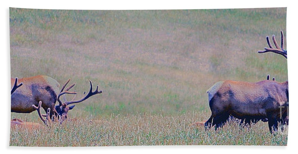 Animals Hand Towel featuring the photograph Elk On The Plains 1 by Alan Look