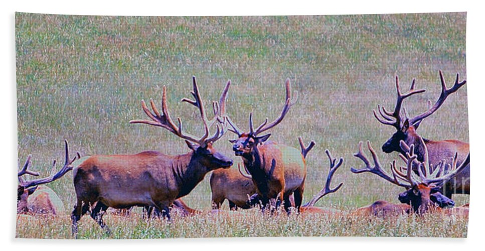 Animals Hand Towel featuring the photograph Elk On The Plains 2 by Alan Look