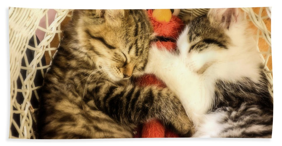 Kittens Hand Towel featuring the photograph Elmos Nap Time---soft Look by Sherman Perry