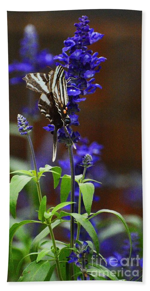 Butterfly Bath Sheet featuring the photograph Elusive Zebra Swallowtail by Cindy Manero