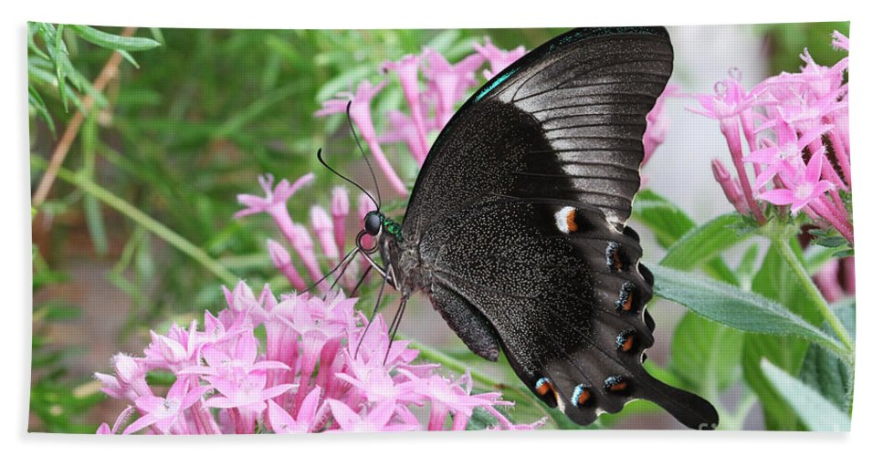 Butterfly Hand Towel featuring the photograph Emerald Peacock Swallowtail Butterfly #5 by Judy Whitton