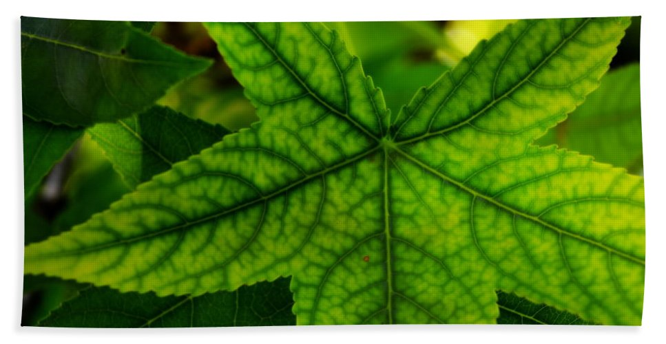 Sweet Gum Hand Towel featuring the photograph Emerging Greens by Kathy Barney