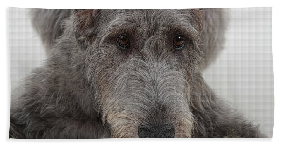Irish Wolfhound Hand Towel featuring the photograph Irish Wolfhound IIi by Agustin Uzarraga