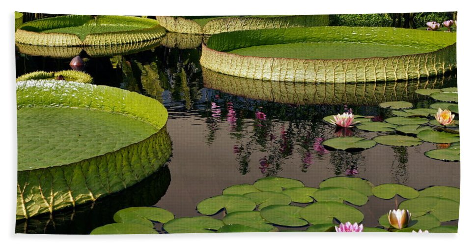 Idyllic Water Garden Scenes Hand Towel featuring the photograph Enchanting Water Garden by Byron Varvarigos