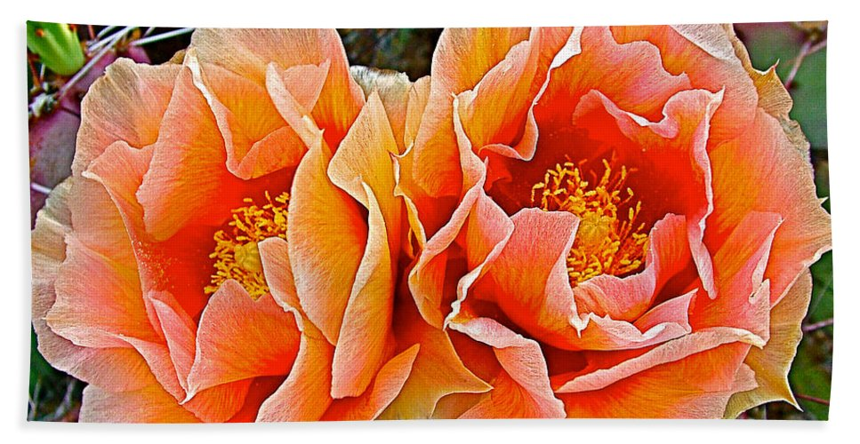Engelmann Prickly Pear Cactus Flowers In Big Bend National Park Bath Sheet featuring the photograph Engelmann Prickly Pear Cactus Flowers In Big Bend National Park-texas by Ruth Hager