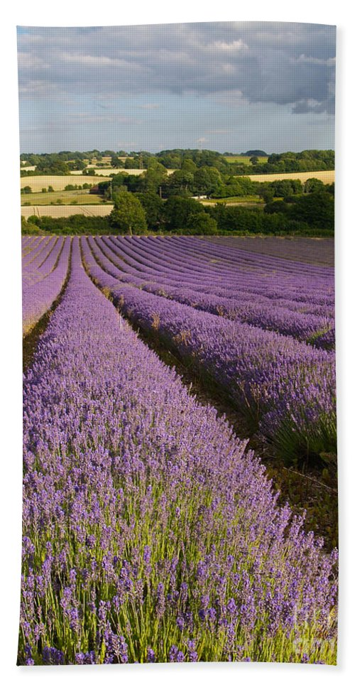 Landscape Hand Towel featuring the photograph English Lavender Near Alton In Hampshire by Alex Cassels