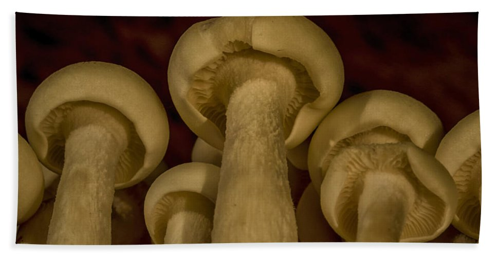 Enoki Bath Sheet featuring the photograph Enokitake Mushrooms by TouTouke A Y