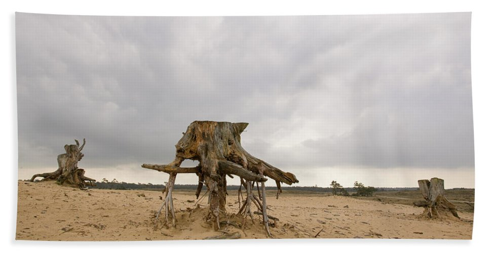 Hoge De Veluwe National Park Hand Towel featuring the photograph Eroded Tree Stumps Stand On Their Roots by Robert van Waarden