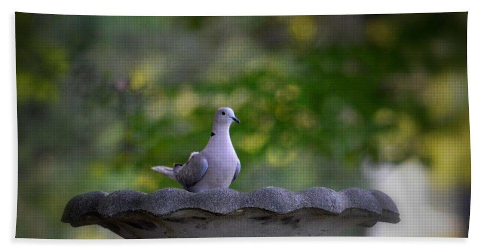 Eurasian Collared Dove Bath Sheet featuring the photograph Eurasian Collared Dove by Maria Urso