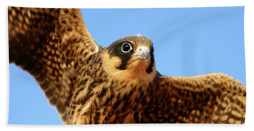 Villafafila Natural Park Hand Towel featuring the photograph Eurasian Hobby Falco Subbuteo In by David Santiago Garcia