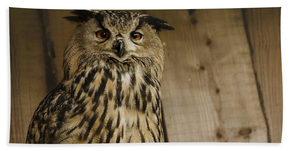 Owl Hand Towel featuring the photograph European Owl by TouTouke A Y
