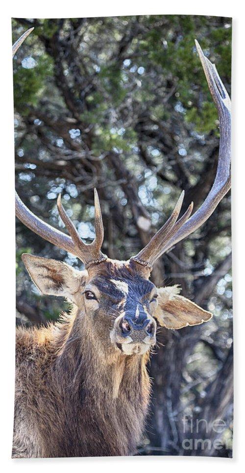 European Red Deer Hand Towel featuring the photograph European Red Deer by Douglas Barnard
