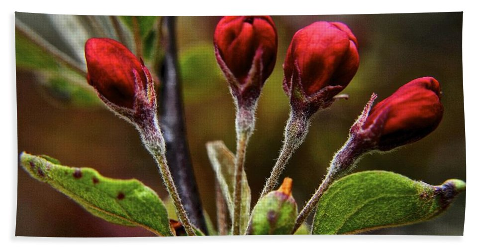 Evening Hand Towel featuring the photograph Evening Beauty by Frozen in Time Fine Art Photography